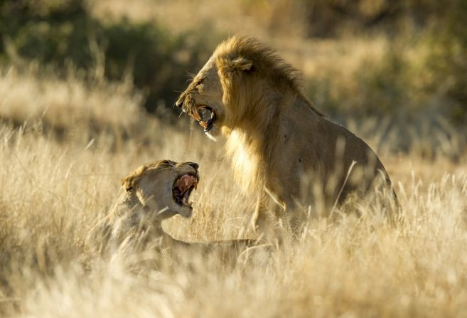 Ten days of remote big game in Katavi, Ruaha & Nyerere