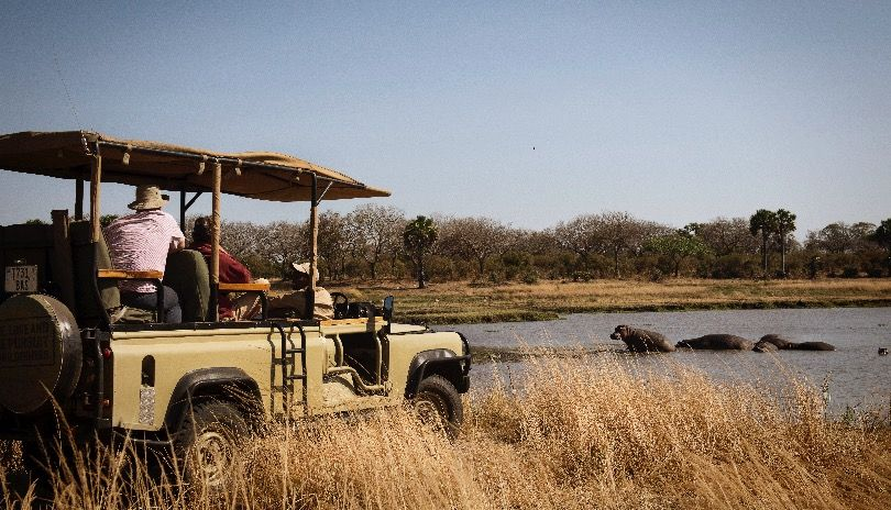 In open game drive cars, you can not only see Katavi, you can hear, smell and feel it.