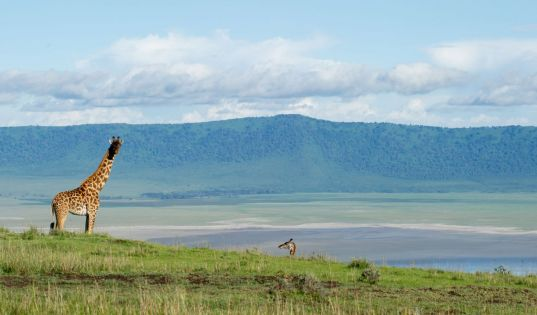 Entamanu Ngorongoro has an enviable position on the rim of the Ngorongroro Crater, which we share with some pretty spectacular neighbours.
