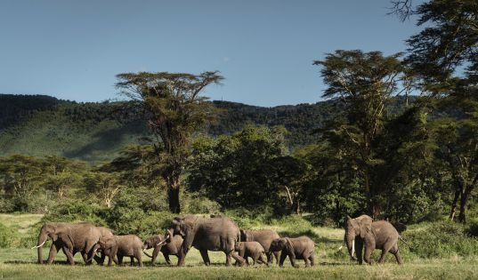 Elephants in the Ngorongoro Crater.