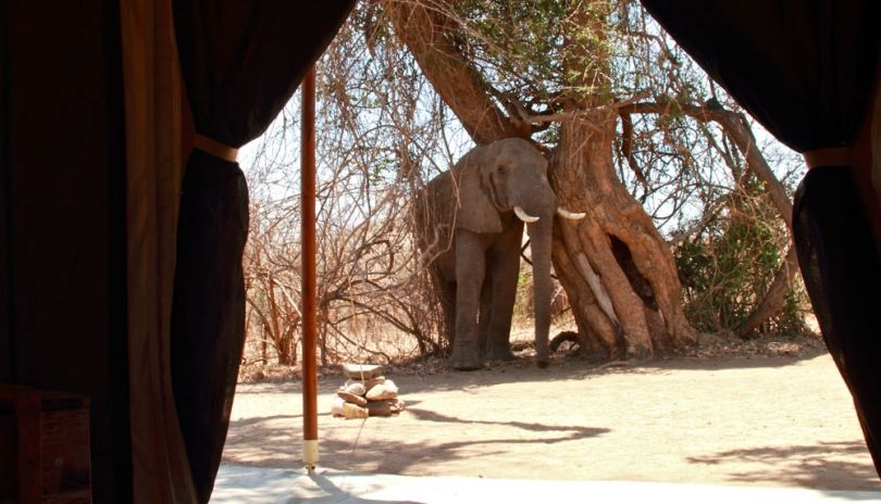 You don't have to go far to meet the neighbours at Kigelia Ruaha.