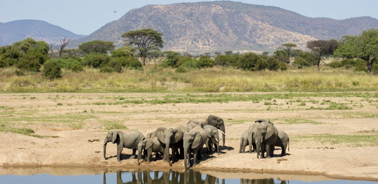 Elephants in Ruaha National Park.