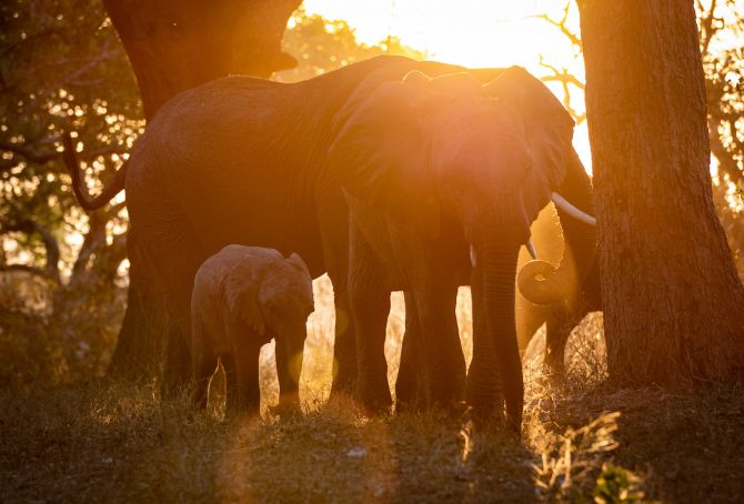 Chada's elephants and Josephine's family