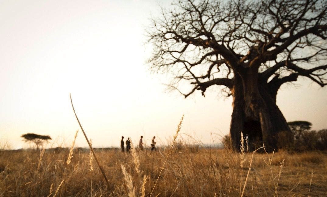 Few things are more humbling than a century-old baobab tree.