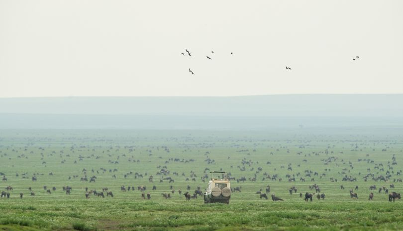 Millions of wildebeest gather on the Southern Serengeti plains.