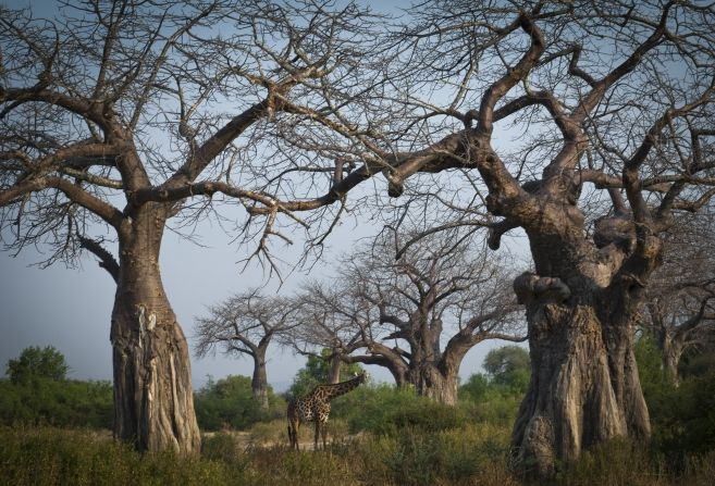 Southern Tanzania: A week in Ruaha and Selous