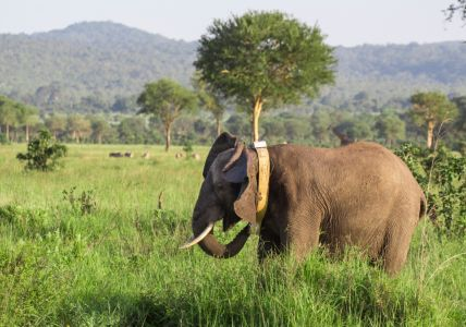 TAWIRI Elephants