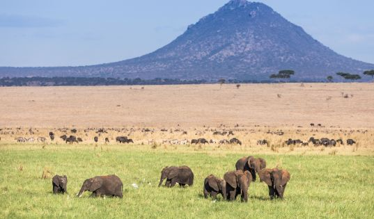Elephant, buffalo, zebra and wildebeest in one frame. This is the promise of the dry season in Tarangire.
