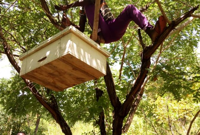 Katumbi Beekeeping Training