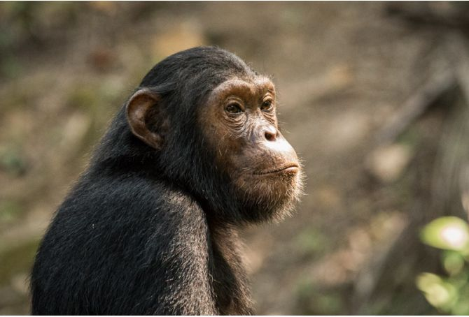 Who gets to name the chimps?